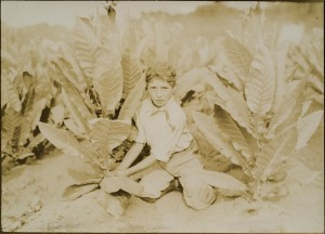 Lewis Hine -- 10 year-old Picker on Gildersleeve Tobacco Farm
